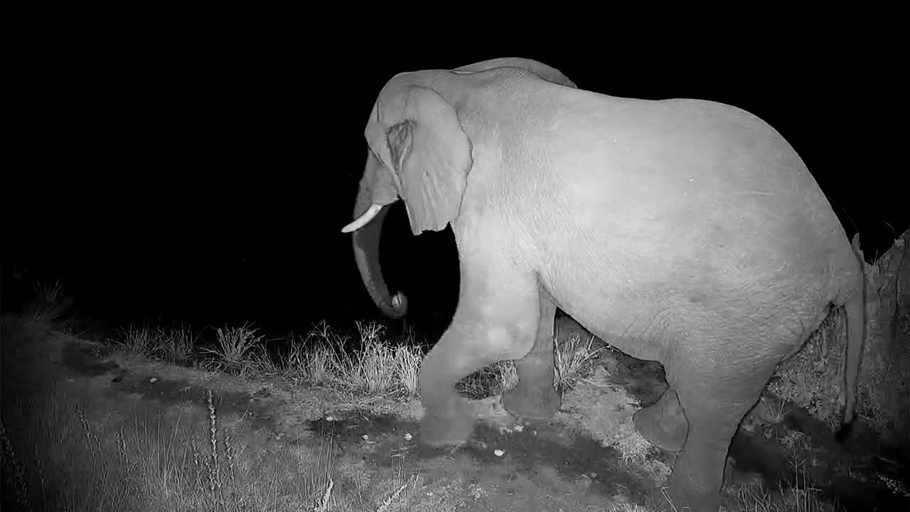 VIDEO: Elephant looking around before having a drink