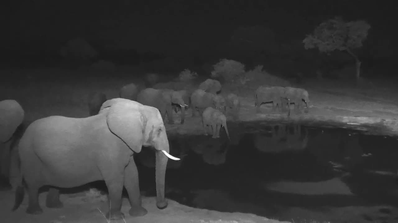 VIDEO:Elephant breedng herd at the waterhole