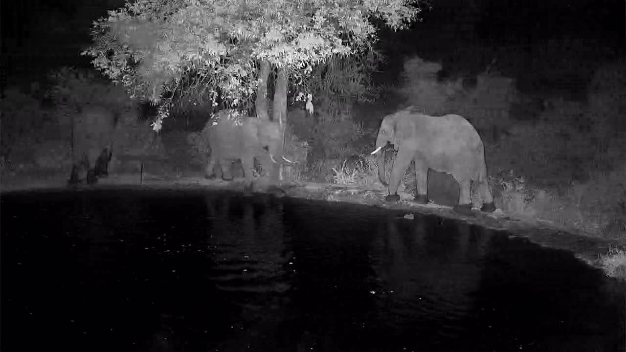 VIDEO:  Elephants drinking and jousting around the waterhole