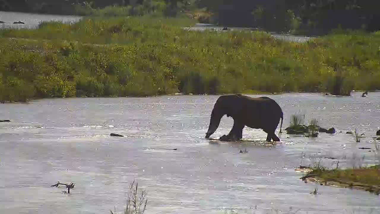 VIDEO:  Elephant crossing the river