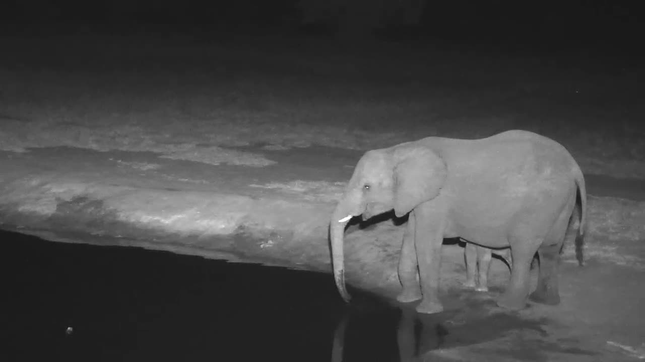 VIDEO:  Elephants - Mom with her baby