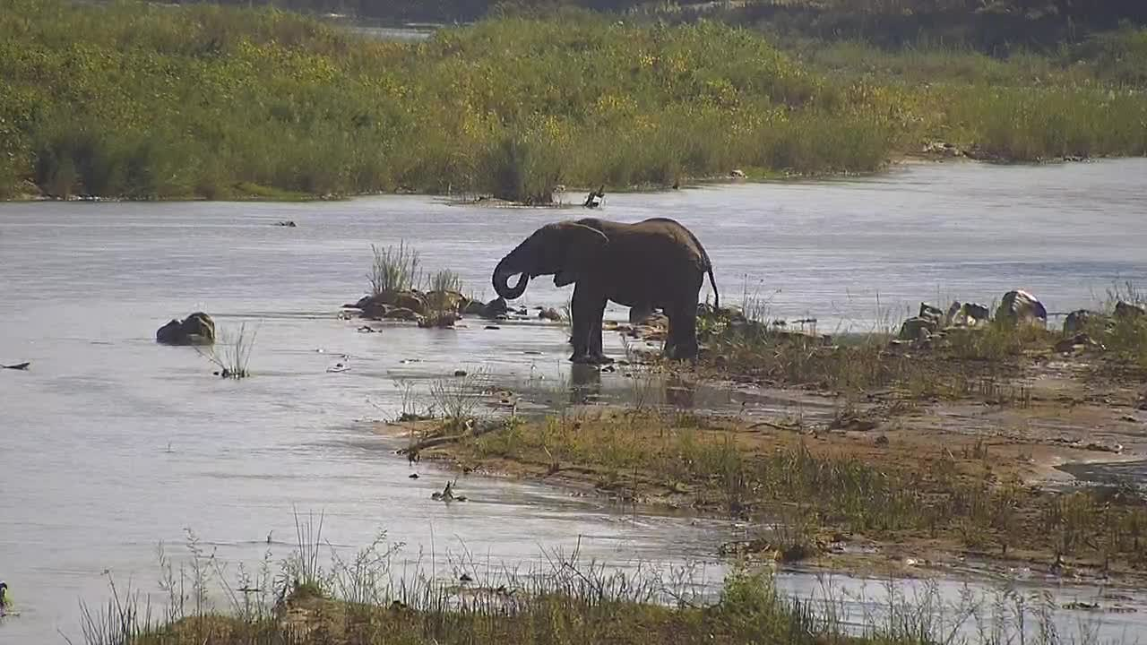 VIDEO: Elephant came for an extensive drink to the river