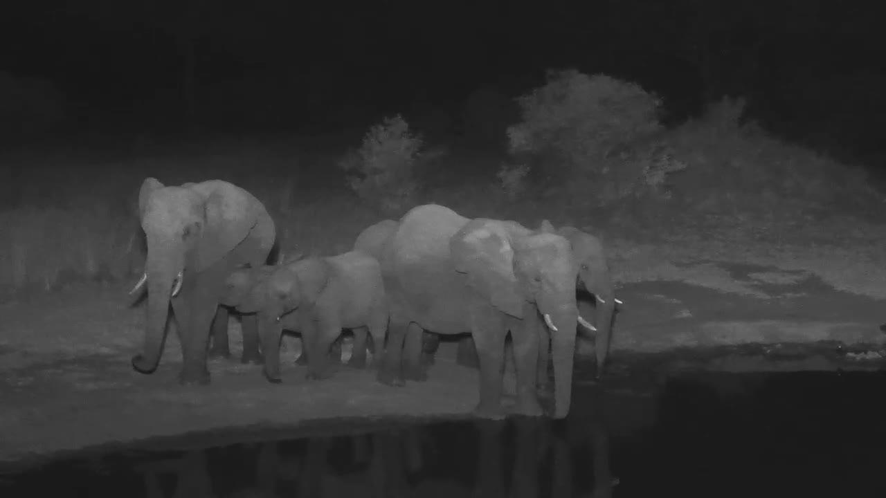 VIDEO:Breeding Herd of Elephants came for a drink to the waterhole - a young one prefers mother's milk