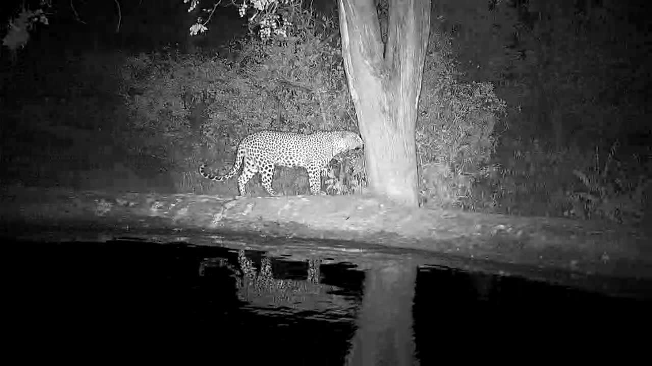 VIDEO:Leopard made a quick visit to the waterhole