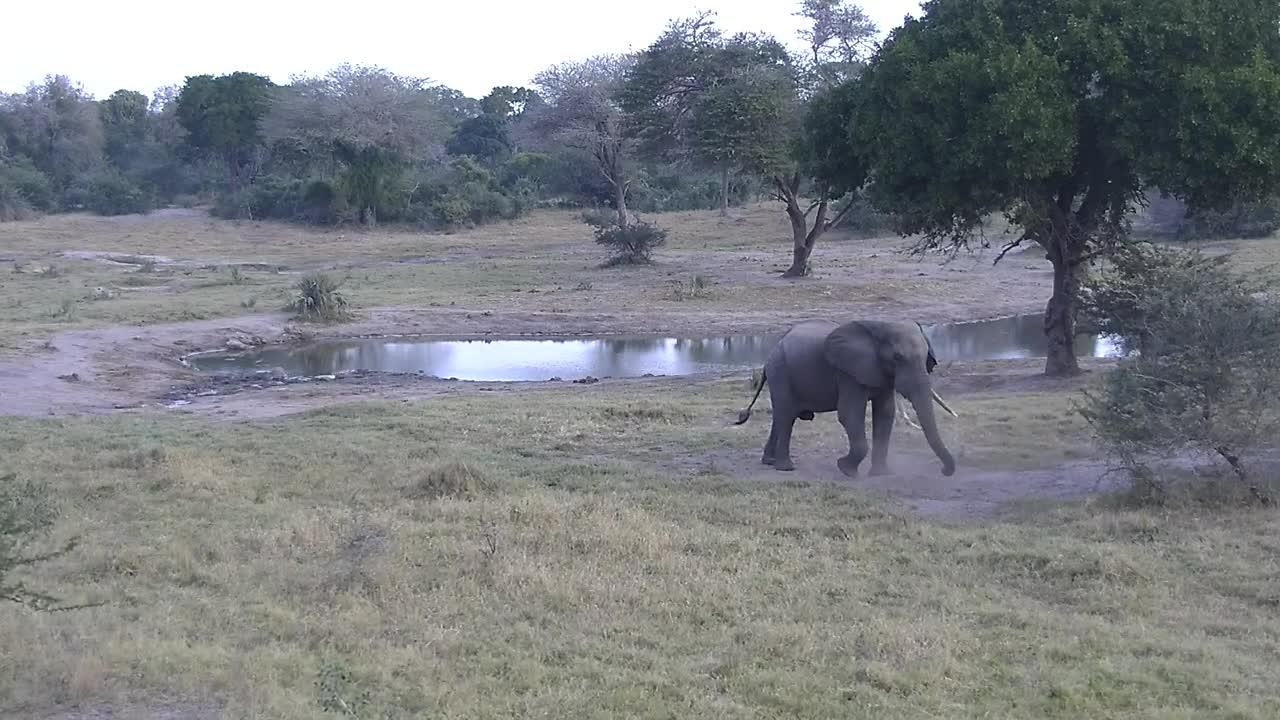 VIDEO:  Elephant having a dust bath