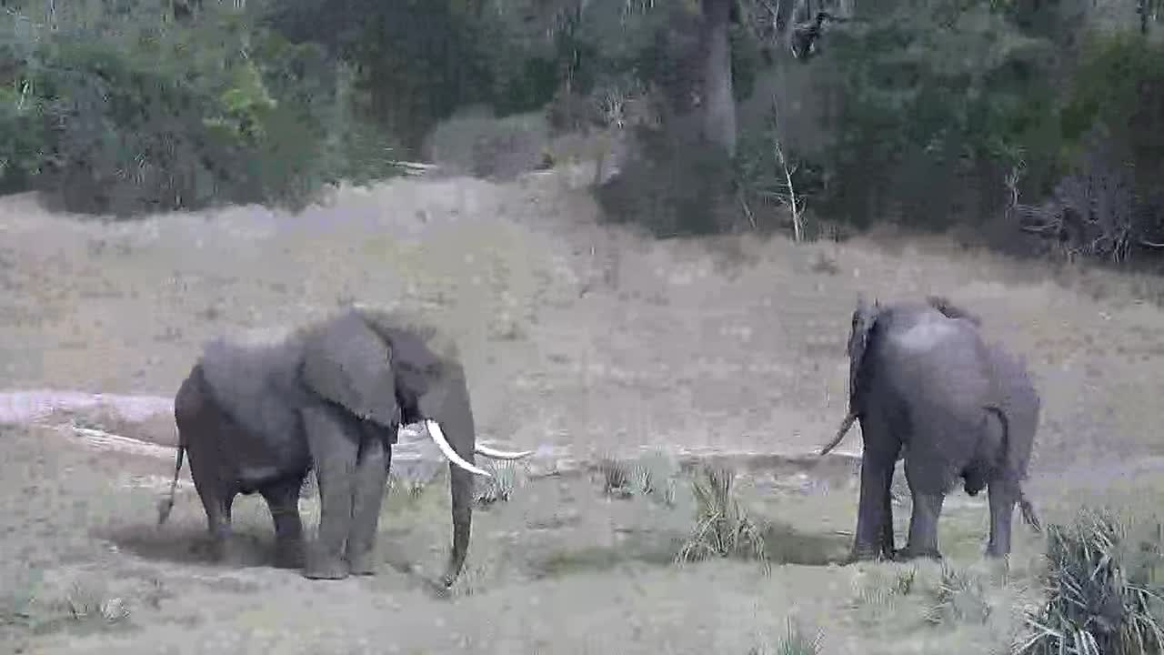 VIDEO: From Elephants  to  the  Lions  in  this  video.