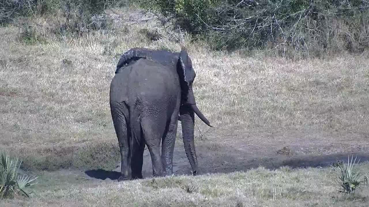 VIDEO:Elephants at the water