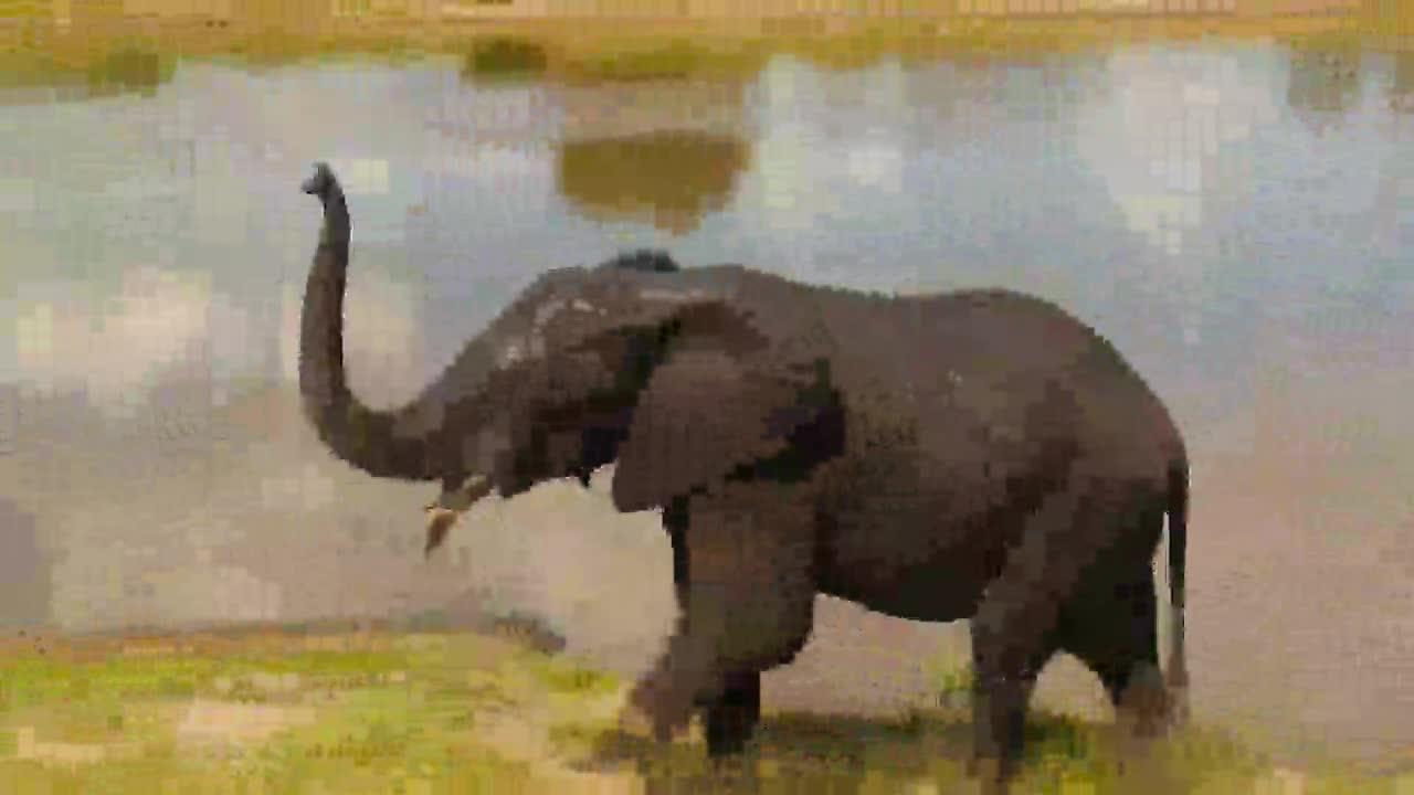 Elephant feeding and leaving Idube