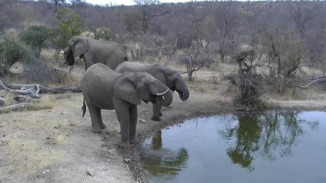 VIDEO: Elephants came for a drink