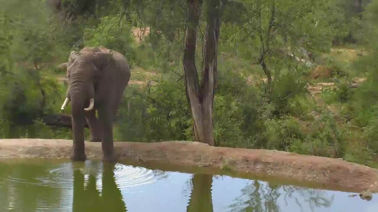 VIDEO:Elephant drinking water