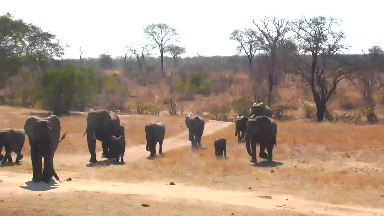 VIDEO:Elephant herd coming to enjoy time at the waterhole