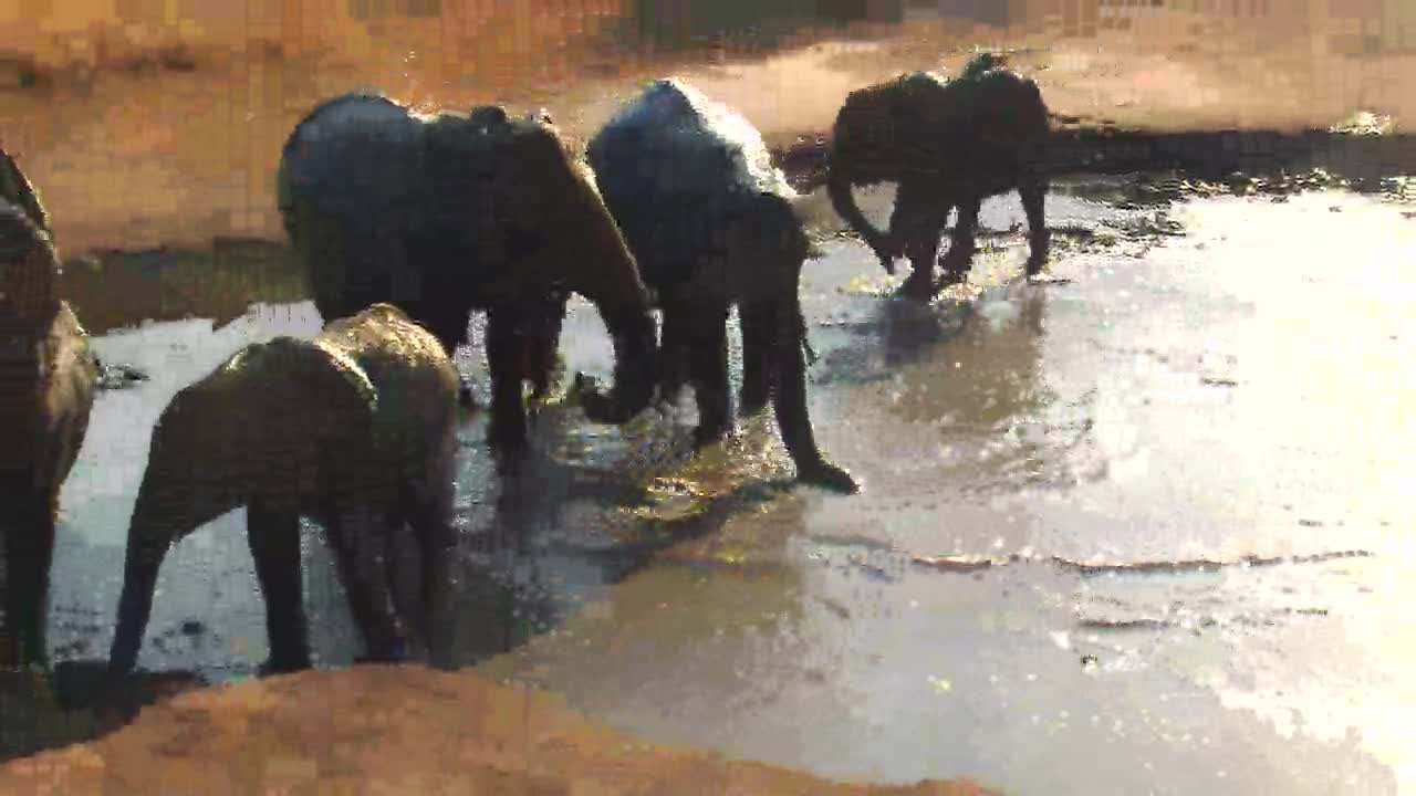 VIDEO: Elephants really enjoy the fresh water