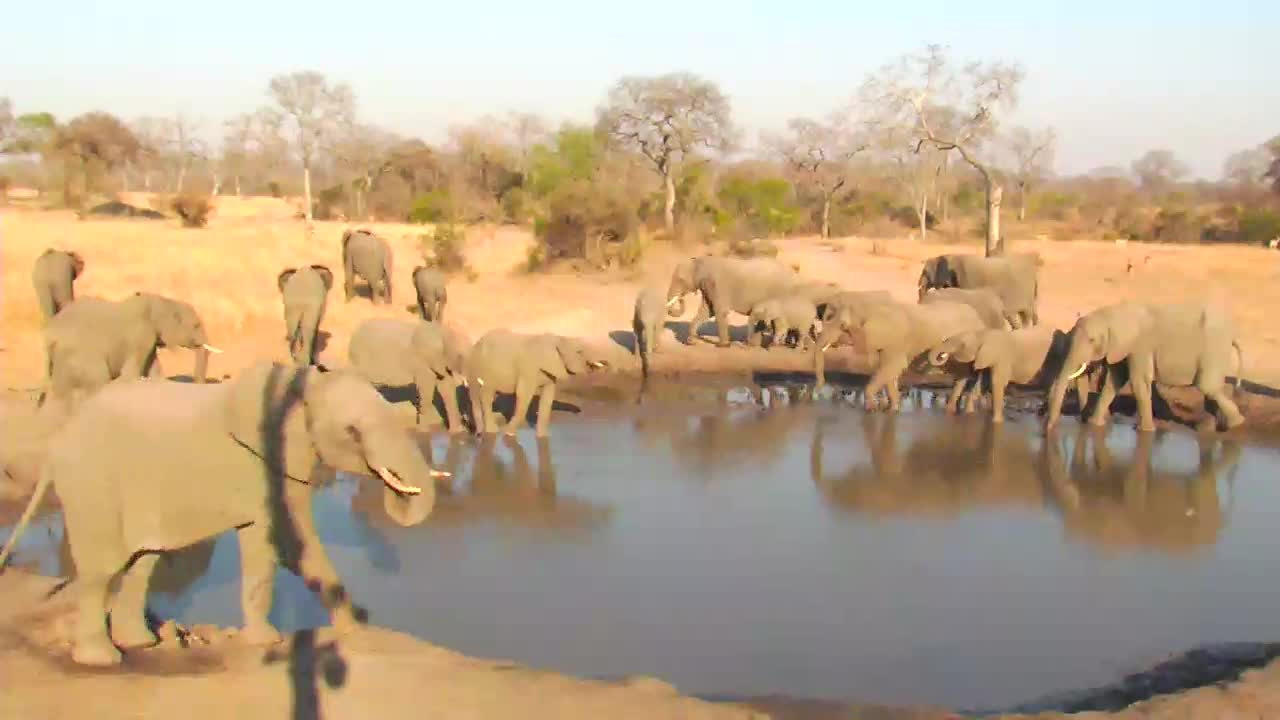 VIDEO: Elephant Breeding herd at the waterhole to have a quick drink