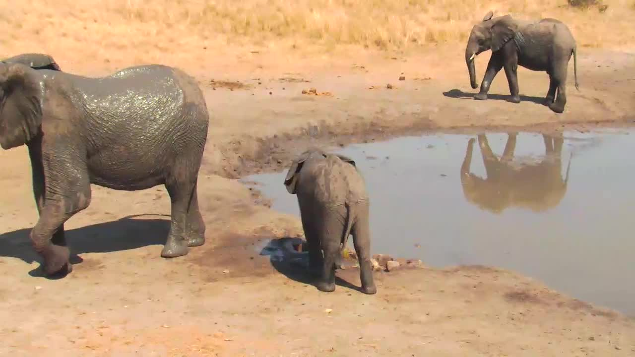 VIDEO: Elephants - young mother with baby - very upset - came for the fresh water to the waterhole