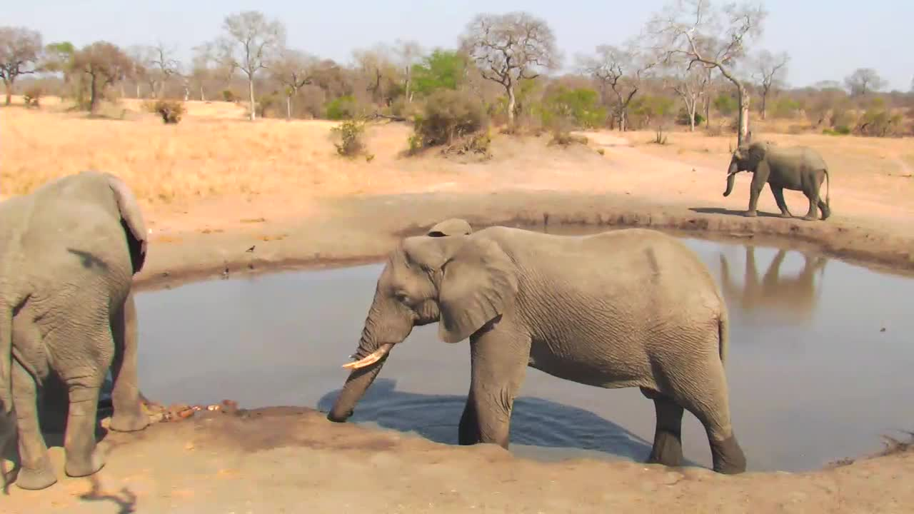 VIDEO:Elephants at the waterhole