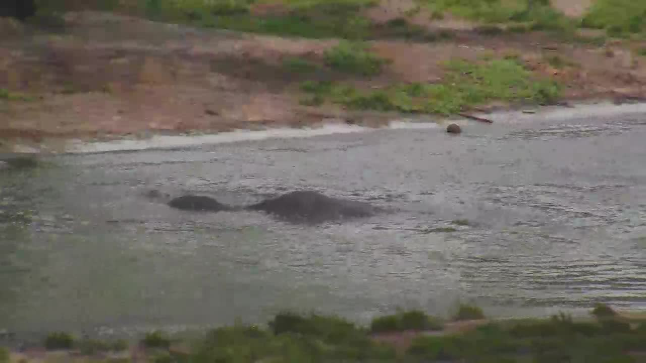 VIDEO:Elephants playing in water