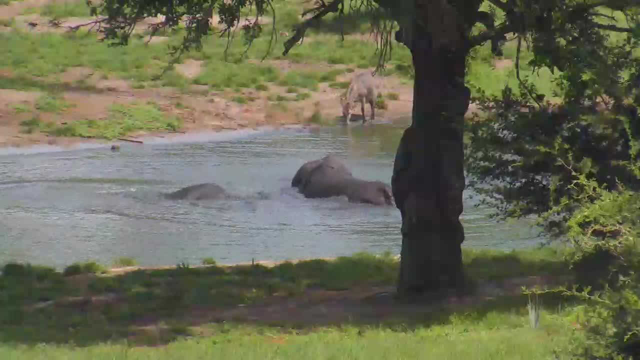VIDEO: Elephants enjoying the water