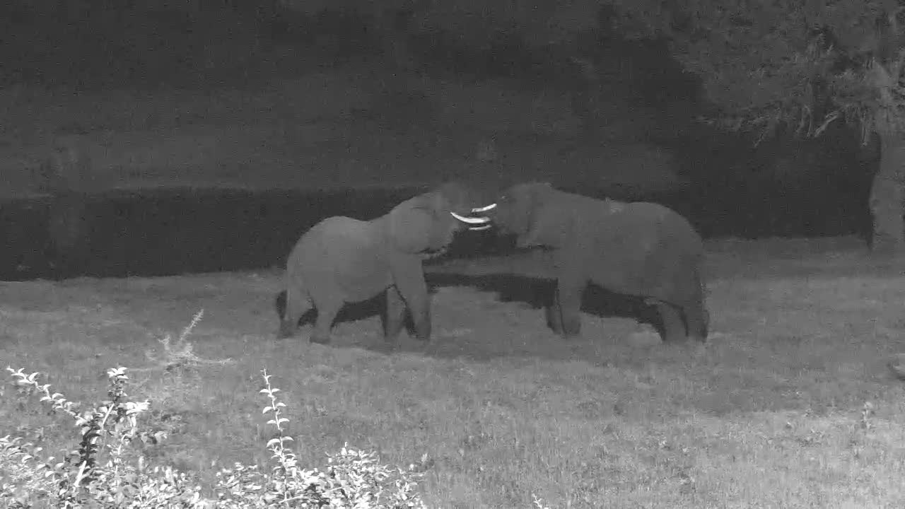 VIDEO:  Two ELEPHANTS sparring