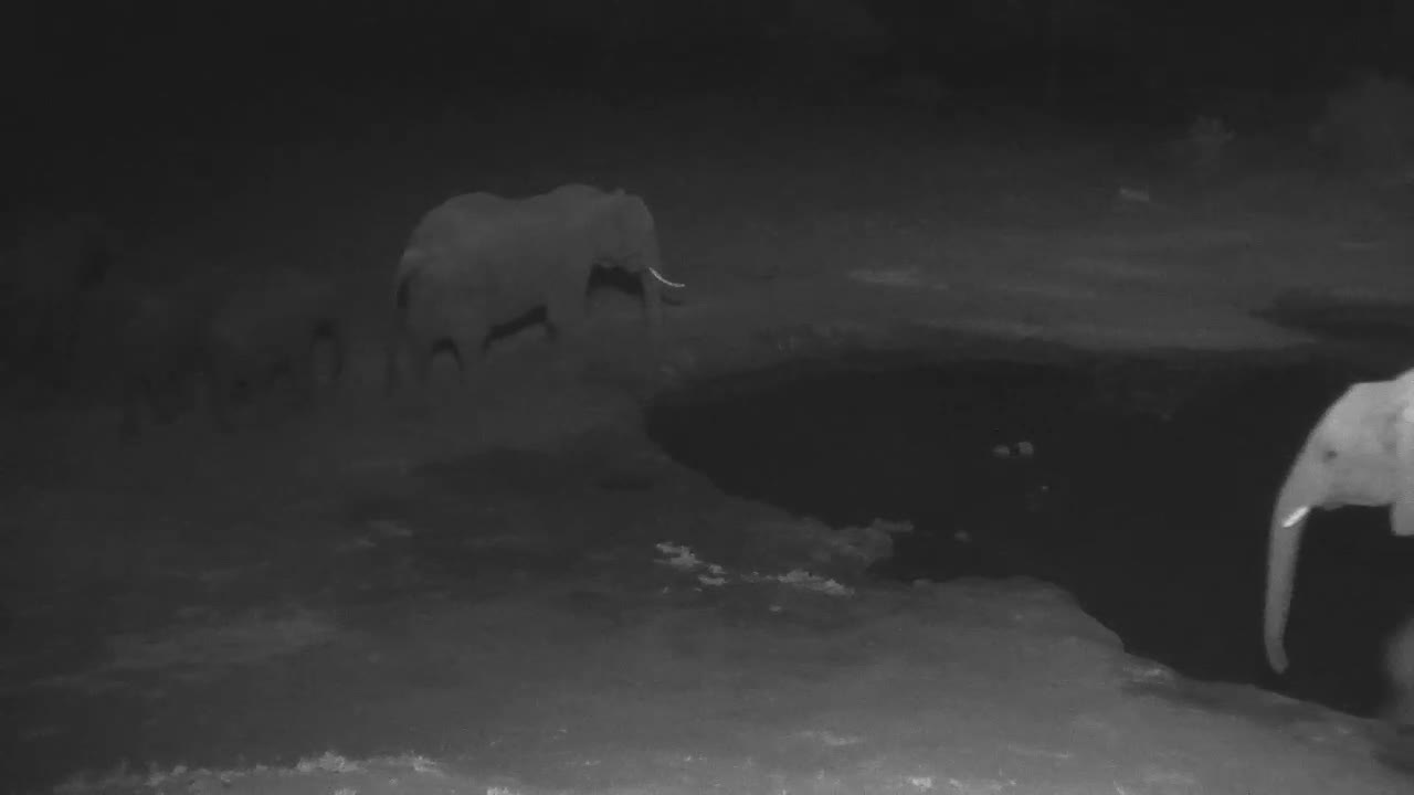 VIDEO: Lions charge approaching Impalas, Elephants to the rescue