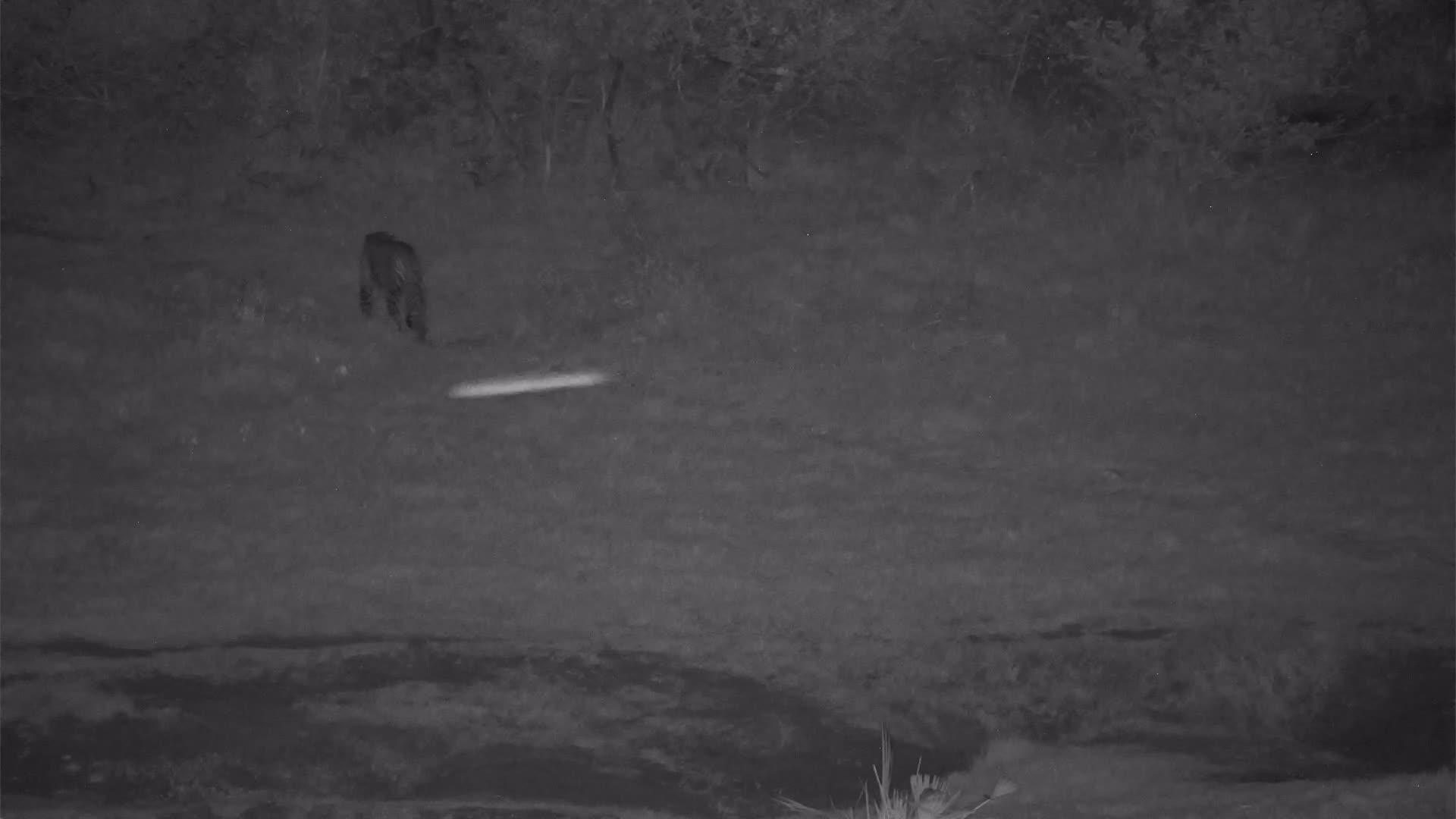 VIDEO:  Leopard walking  pass the waterhole