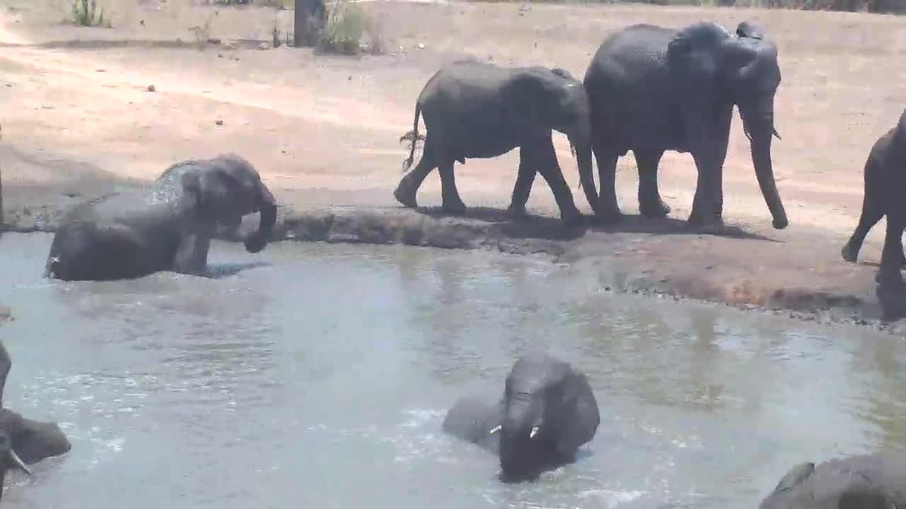 VIDEO:  Elephant family coming to the waterhole for a swim