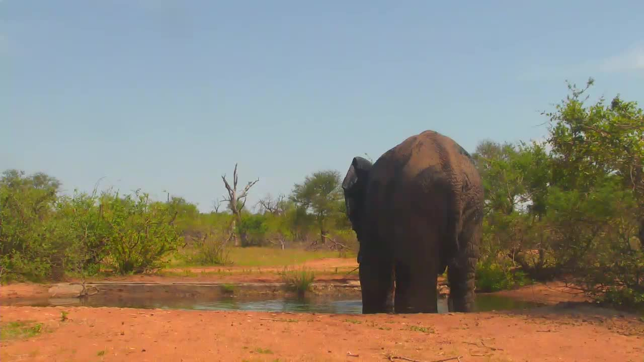VIDEO:  Elephant enjoying a bath to cool off