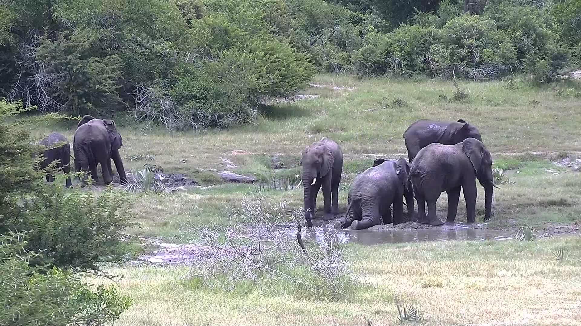 VIDEO:  Elephant enjoying a mud bath
