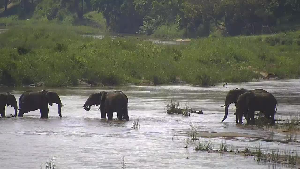 VIDEO: Elephants enjoying the water as they cross the river