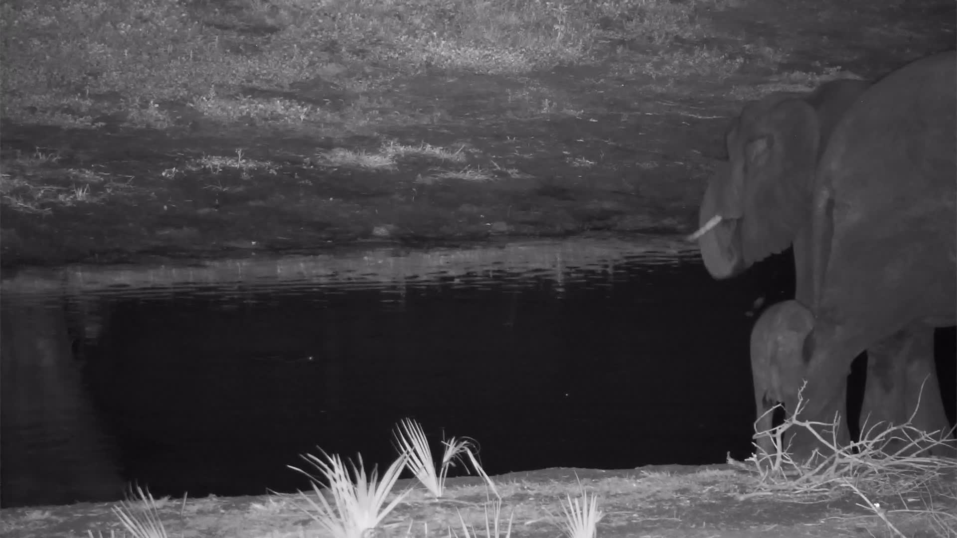 VIDEO: Elephants with a tiny Baby came to the waterhole for a short drink
