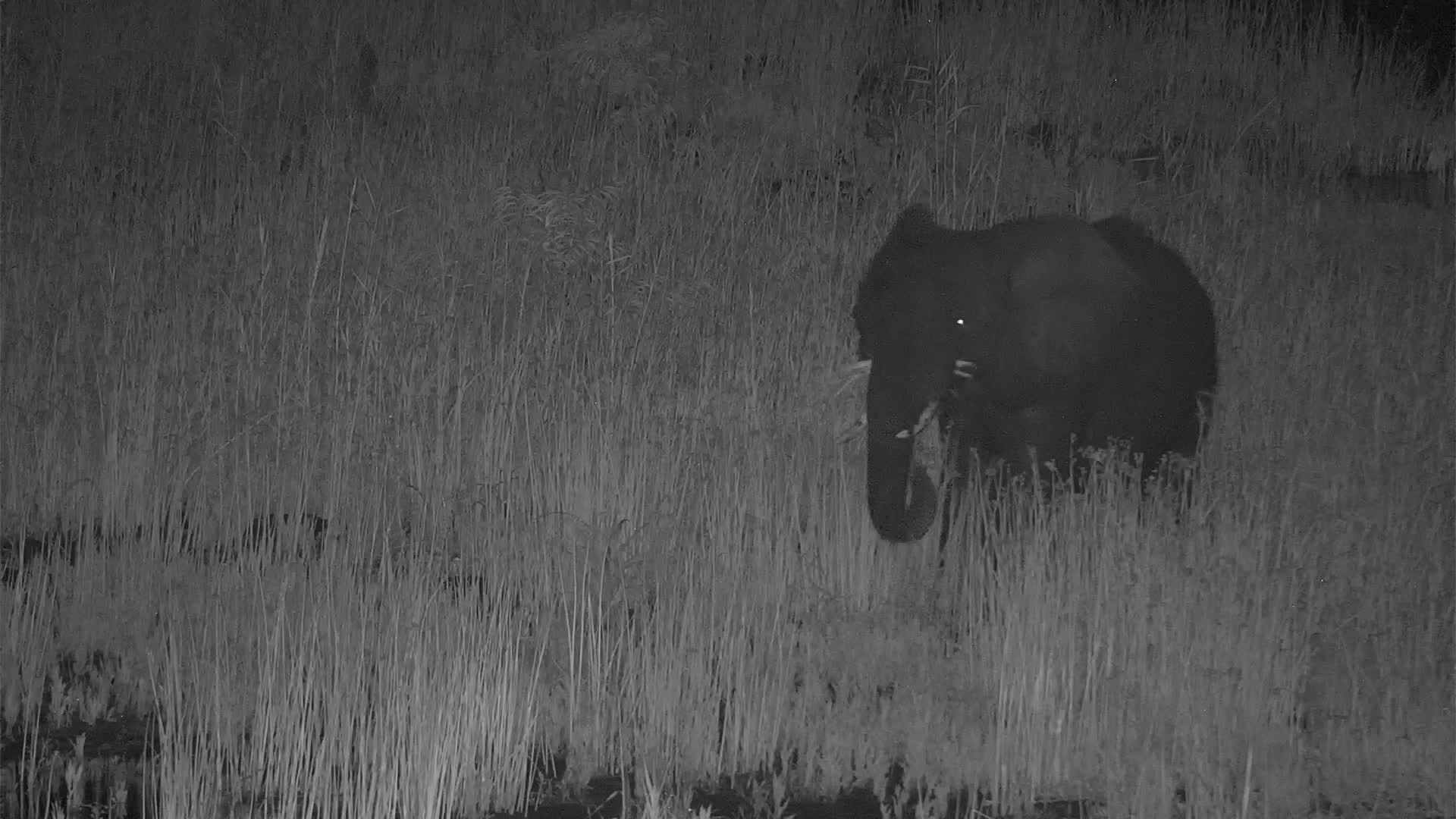 VIDEO:  Lively Elephant Slides Down the bank and Crosses the River