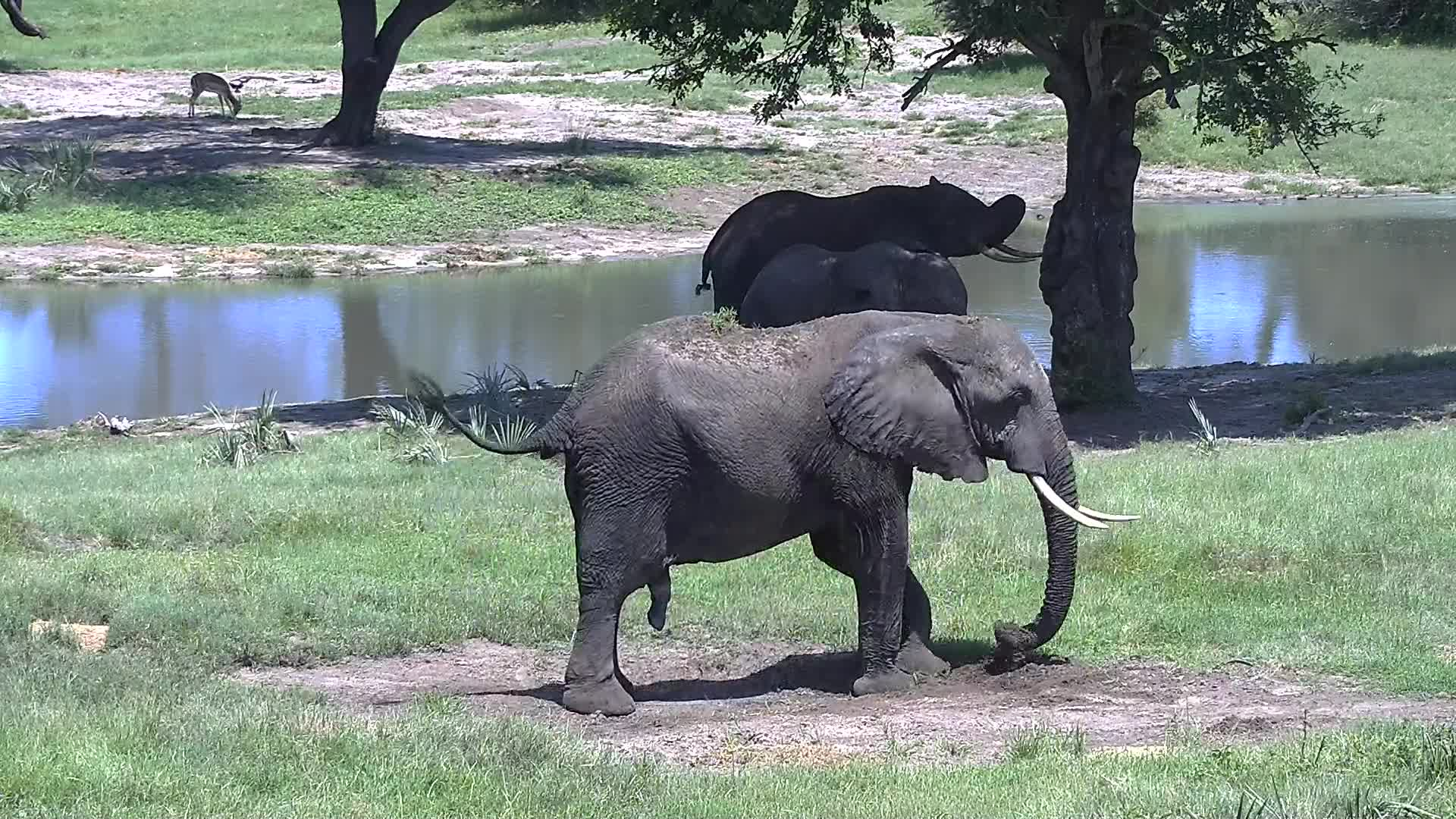 VIDEO: Elephants enjoy the dust and the shade