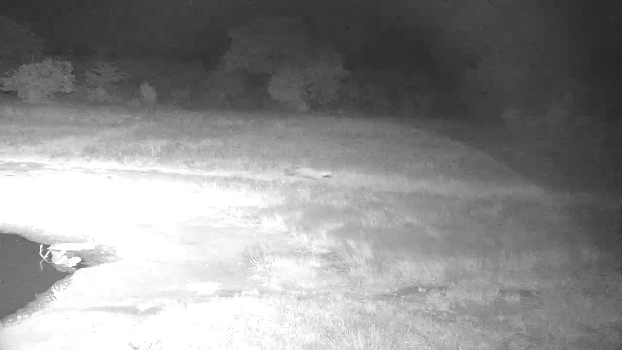 VIDEO:  LEOPARD strolling pass the waterhole