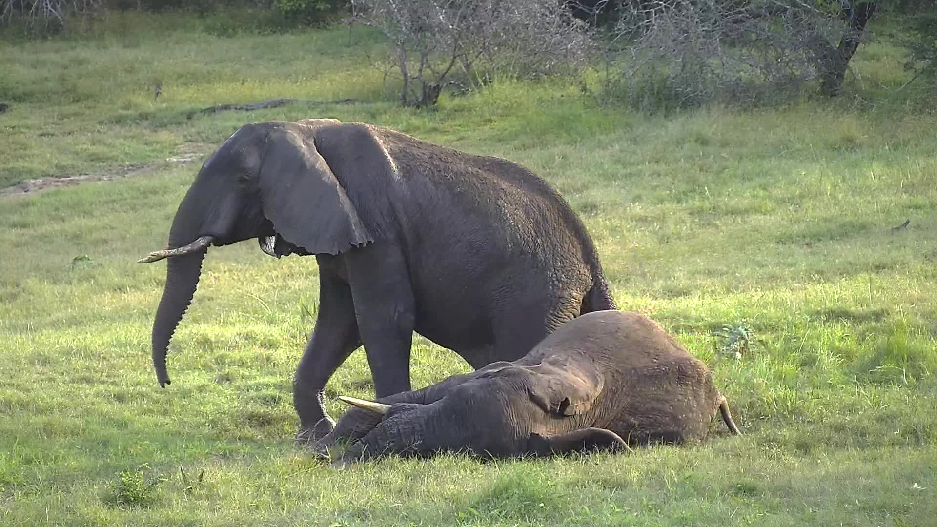 VIDEO:  Elephants having a lovely time around the waterhole
