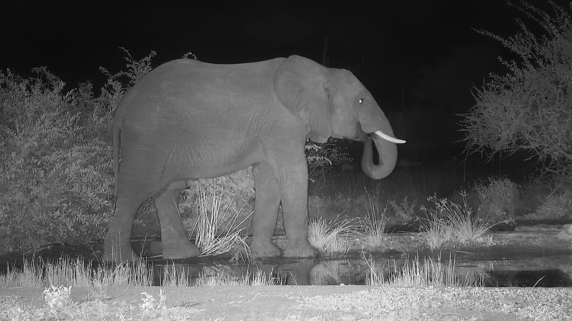 VIDEO: Elephant at the waterhole