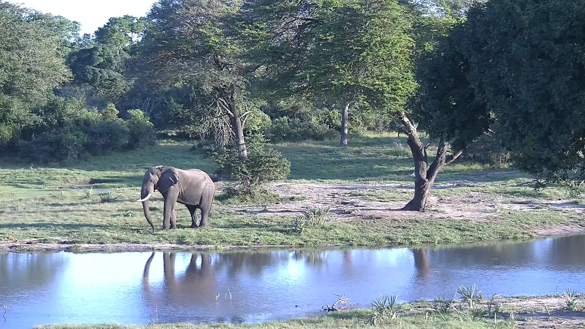 VIDEO:  Elephant walking past the waterhole