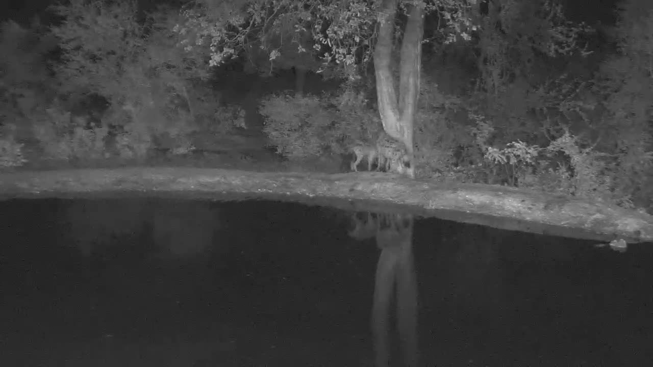 VIDEO: SPOTTED HYAENA Pool Party, Part 3