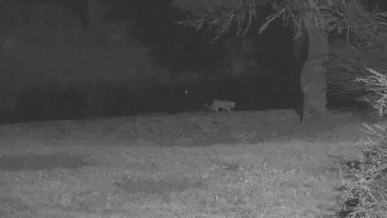 VIDEO: LEOPARD getting at drink