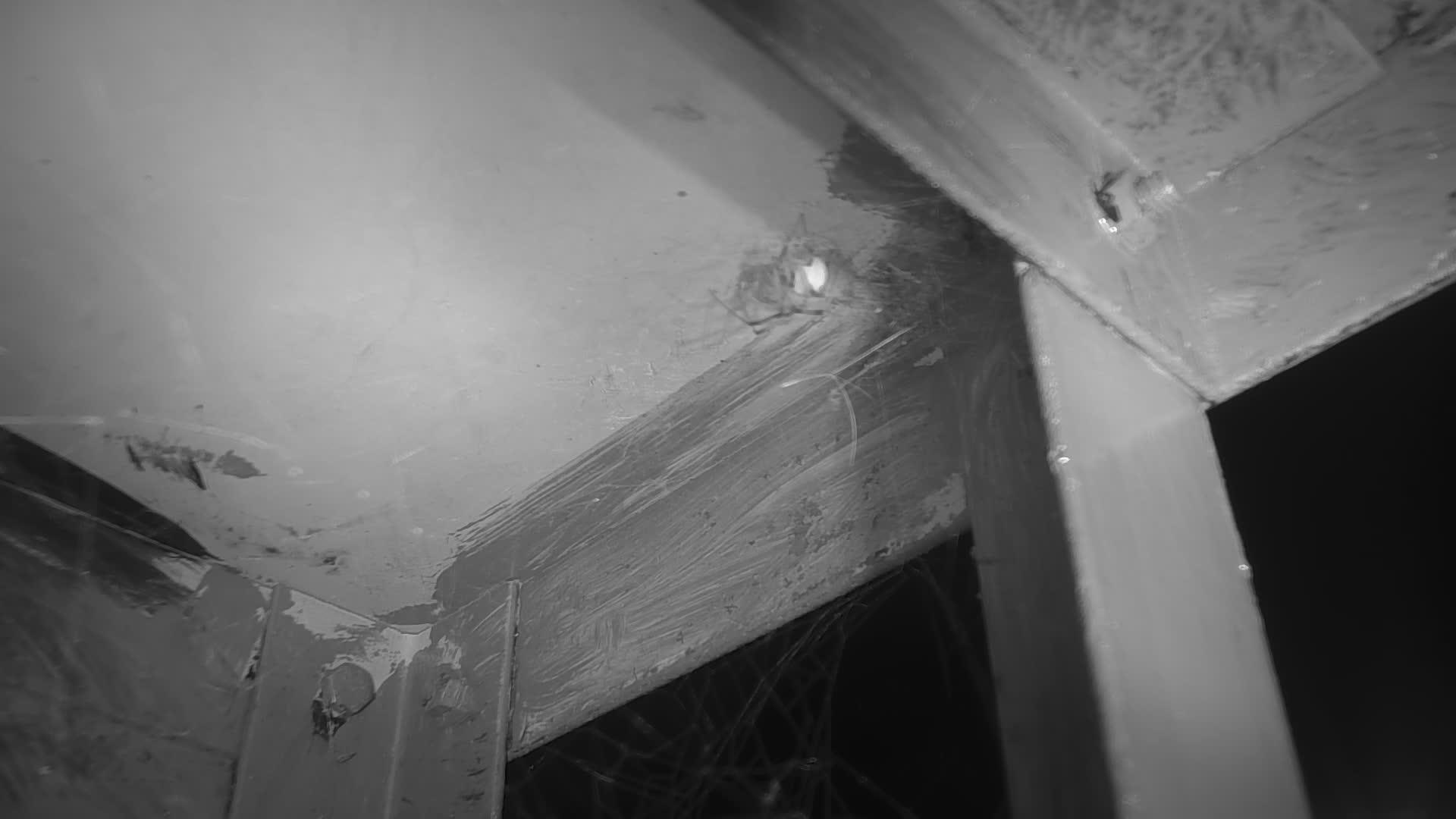 VIDEO: Spider.