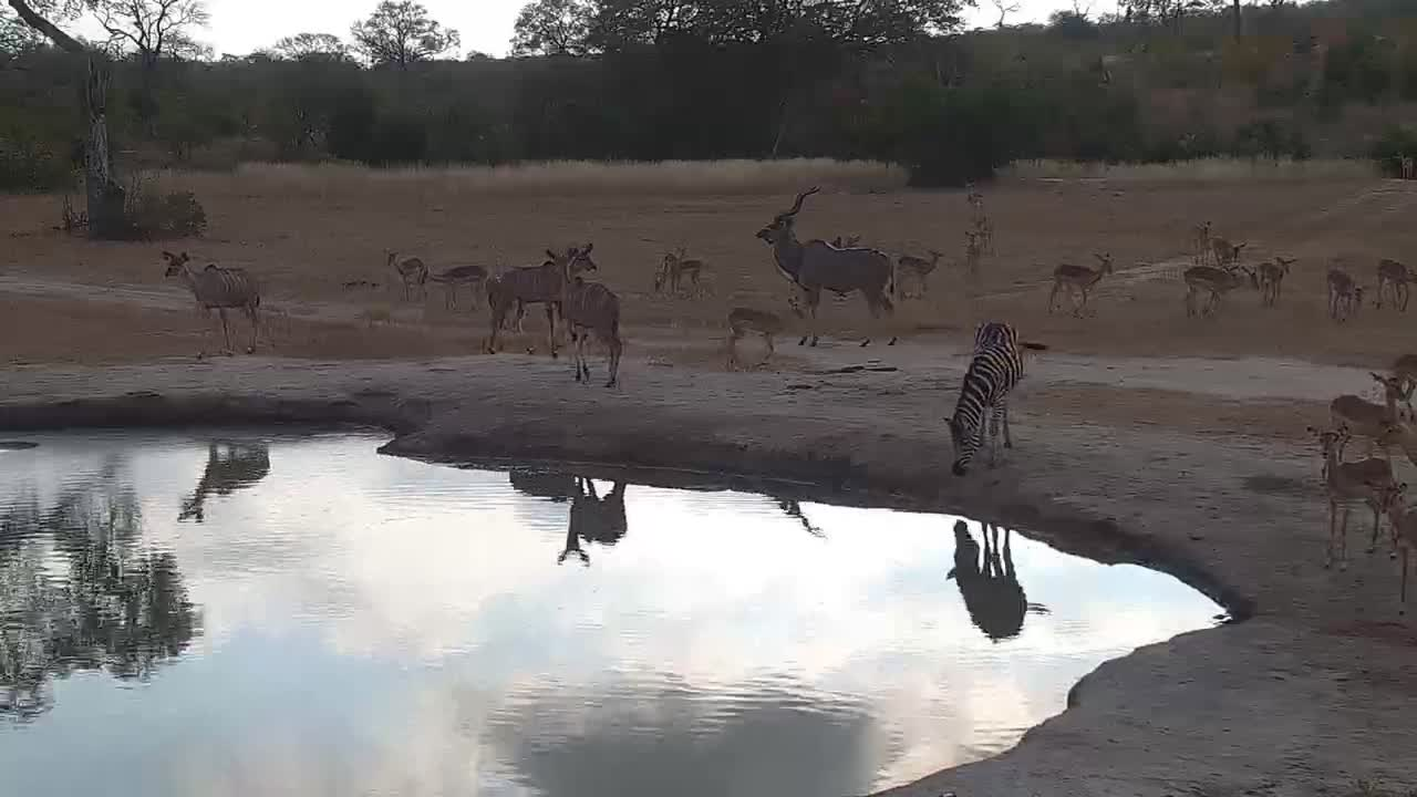 VIDEO: Gathering of the thirsty.