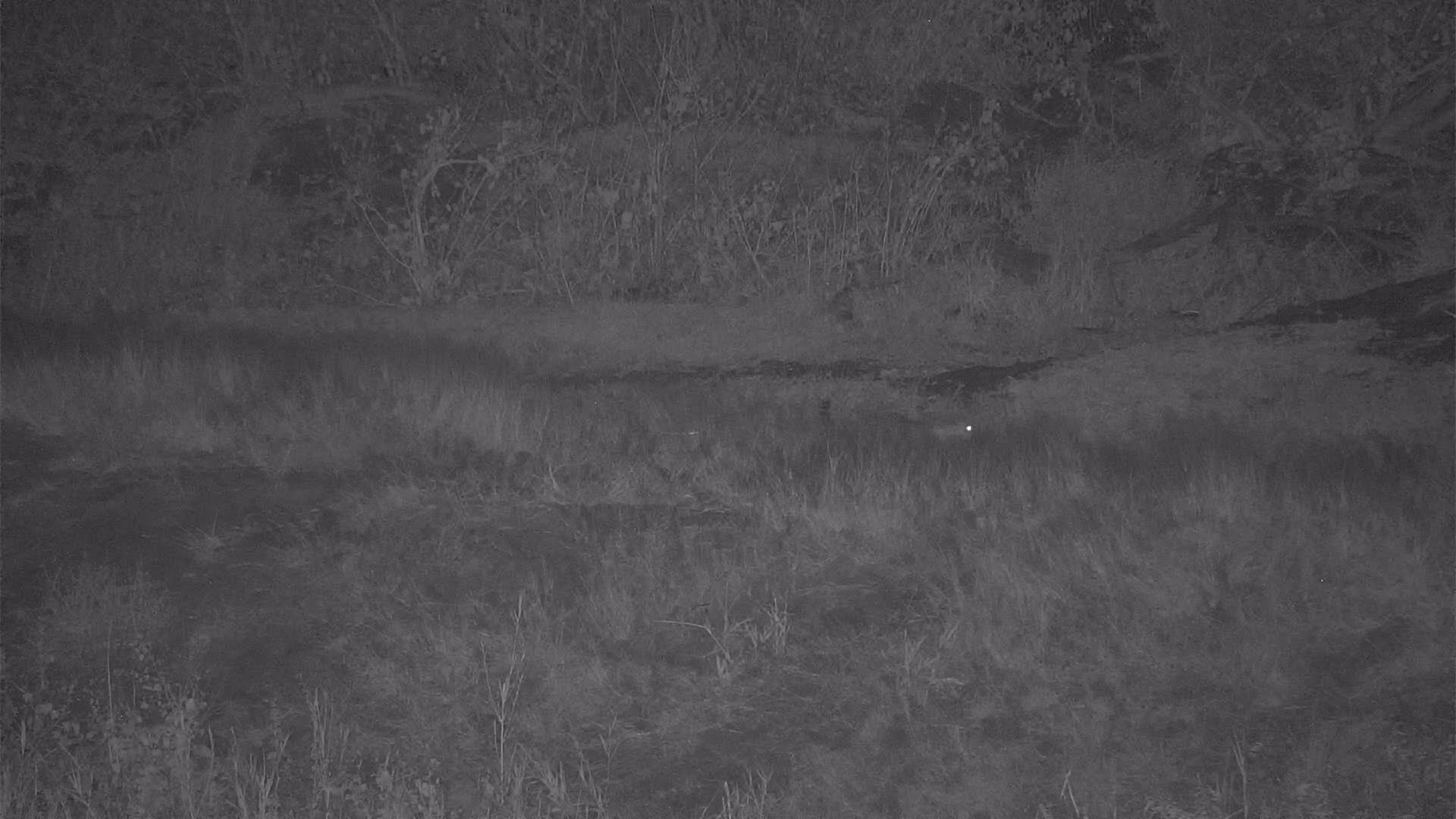 VIDEO:   Leopards: Mom on the hunt and youngster wants to play