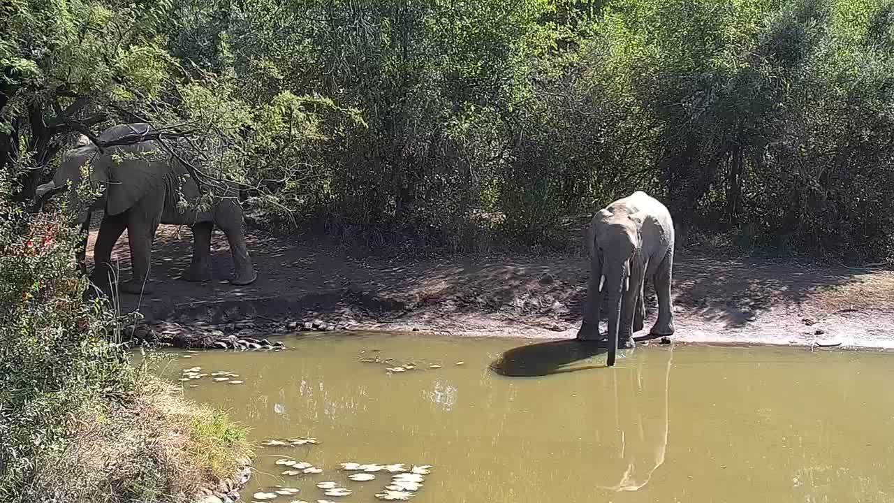 VIDEO: Starting  with  Elephants coming to  the  waterhole