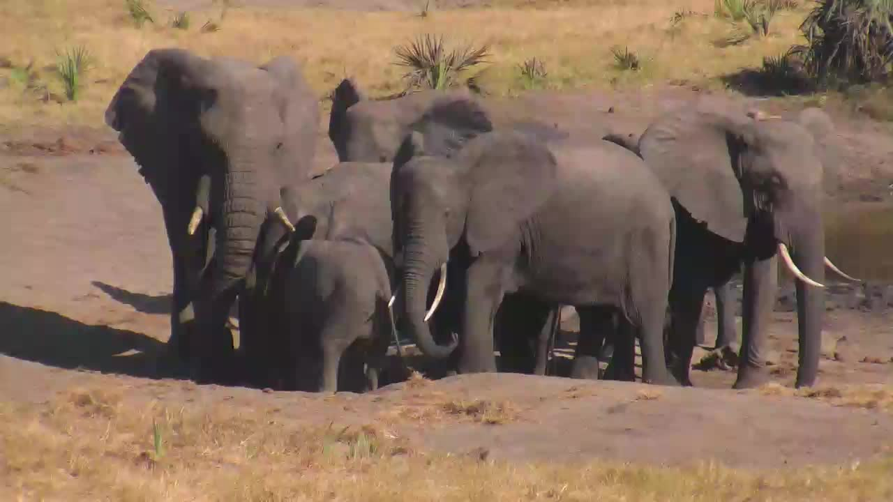 VIDEO: Elephants enjoy the fresh  water -  and the small one claims its place.