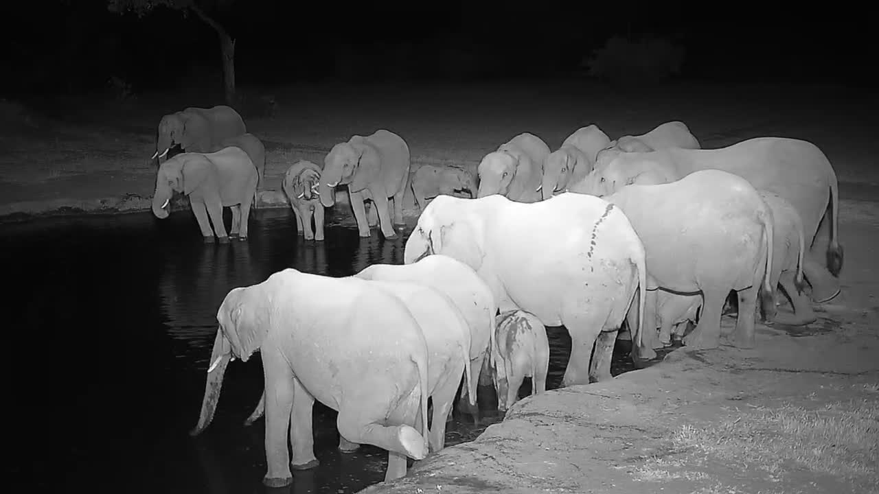 VIDEO: Elephants: Big and small