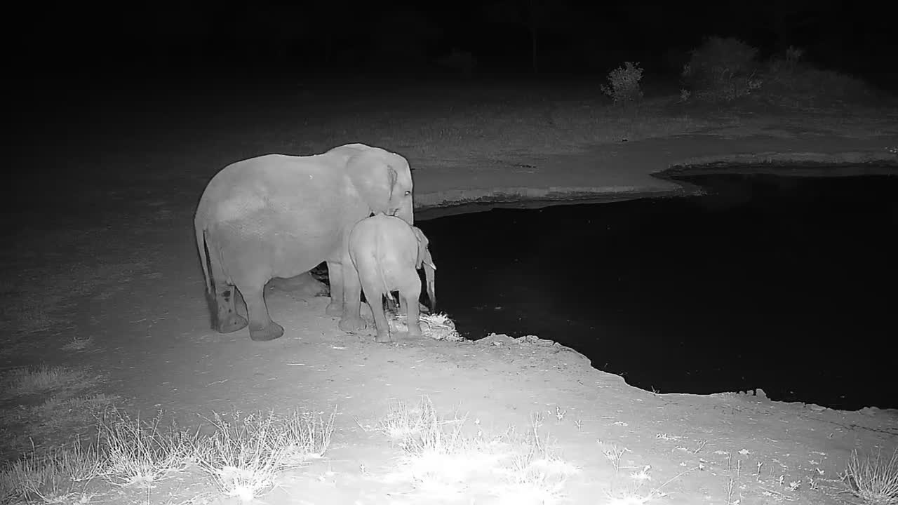 VIDEO: Elephant Family