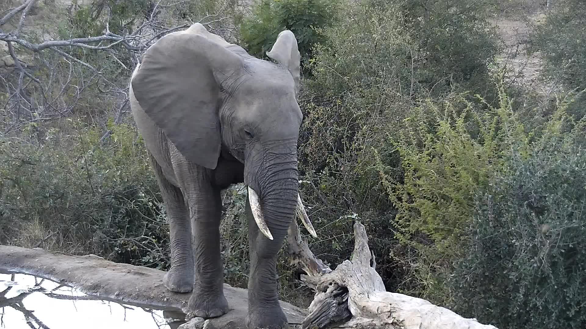 VIDEO: Elephants meeting