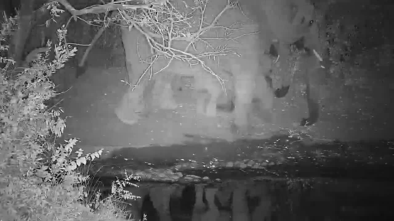 VIDEO: Elephants with youngsters at night