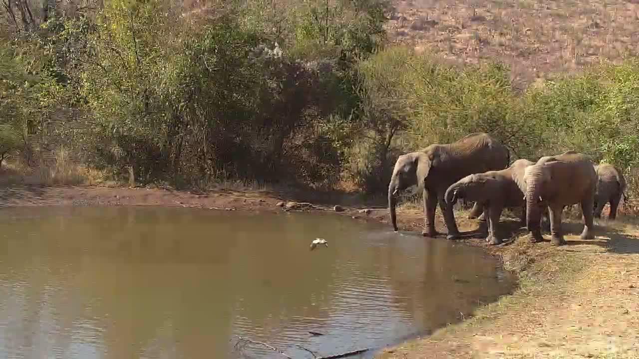 VIDEO:  Elephants enjoying a drink of water at the waterhole