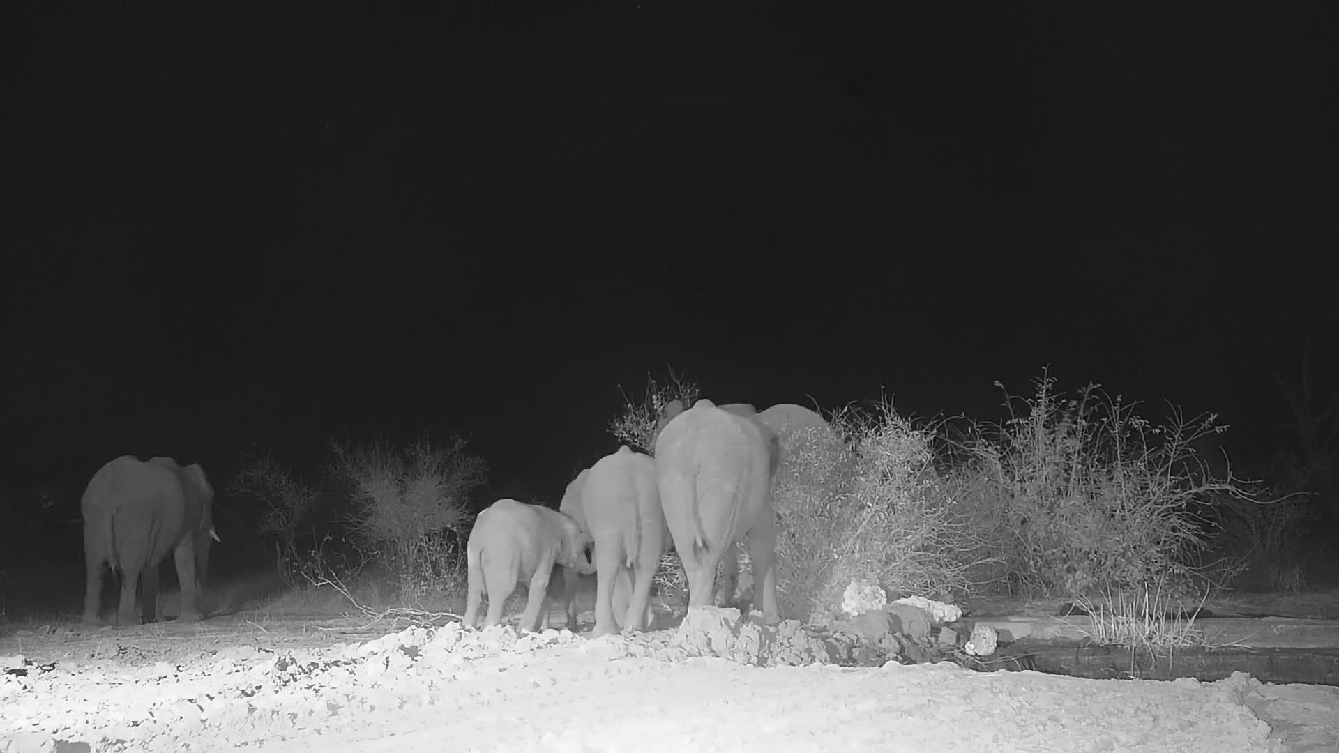 VIDEO: Elephants come for a drink