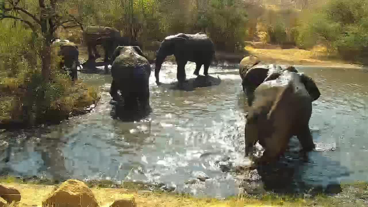 VIDEO: Elephant Pool Party