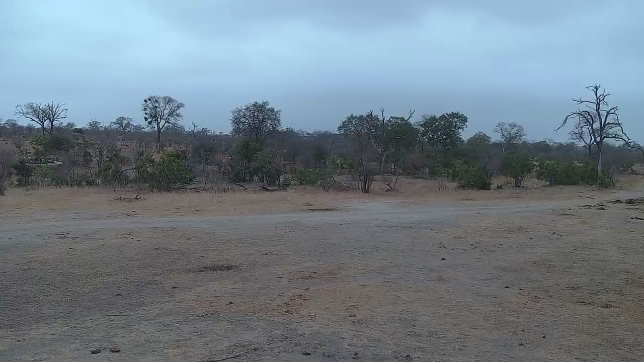 VIDEO: 2 Cheetahs in the area and at the waterhole  PT3